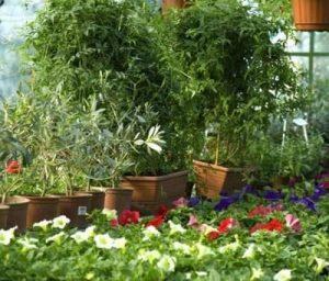 Botanical Gardens Noida