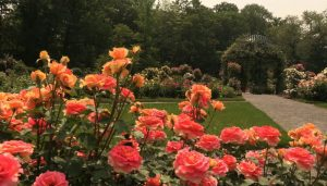 Rose Garden Noida